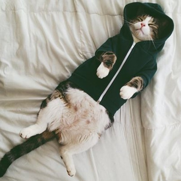 Cat in a hoodie