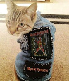 Cat in denim