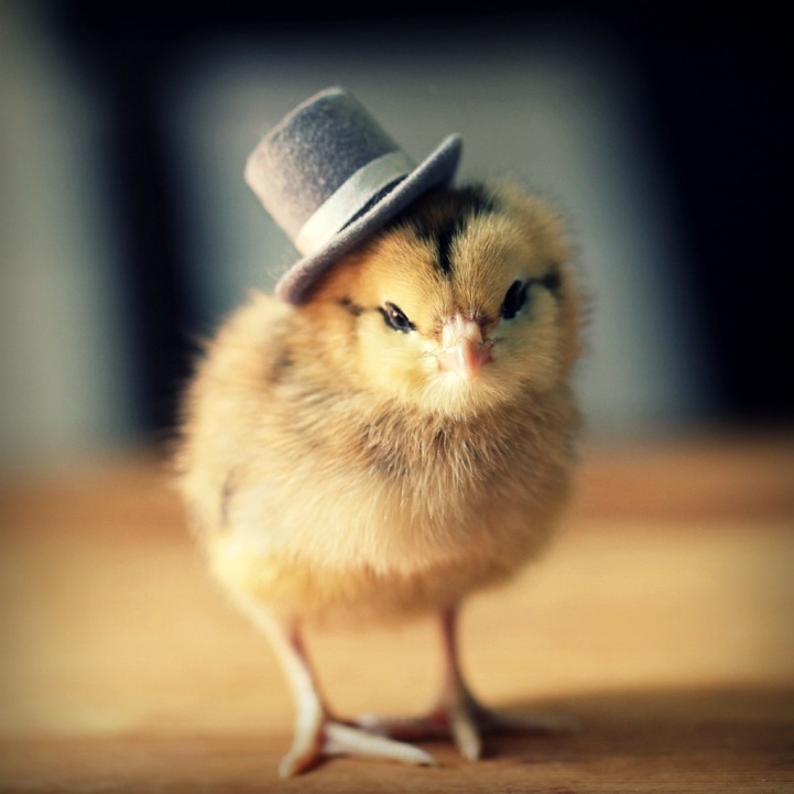 Chick in a hat