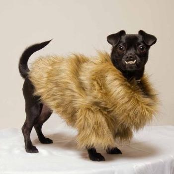 Dog in faux fur