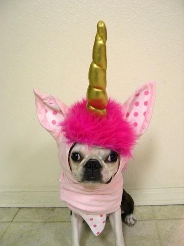 French unicorn