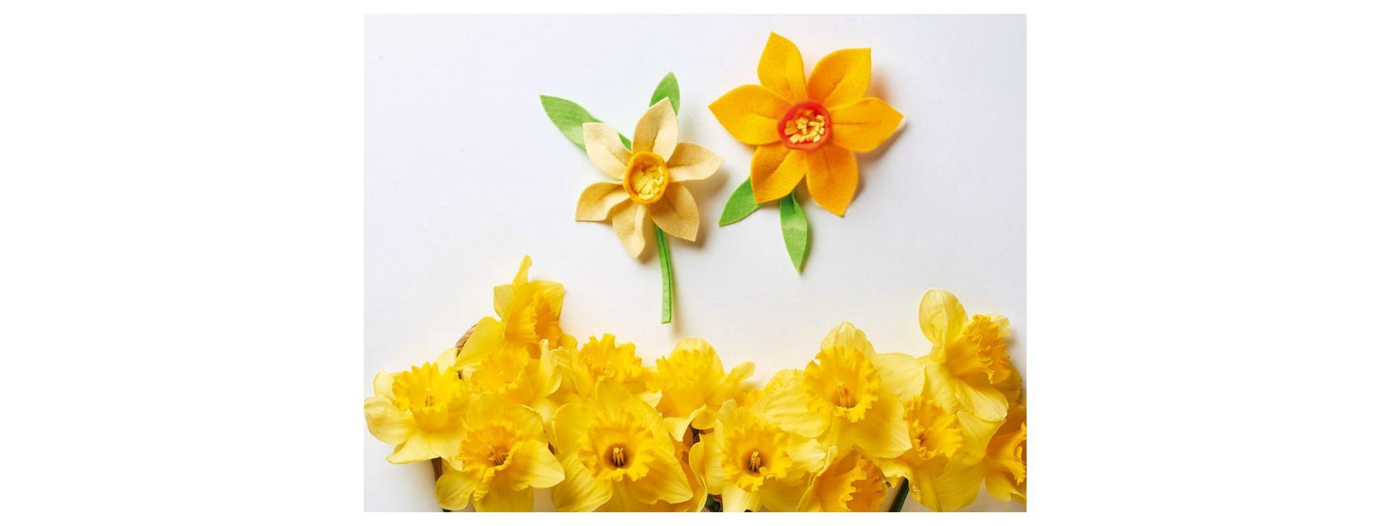 Daffodil project